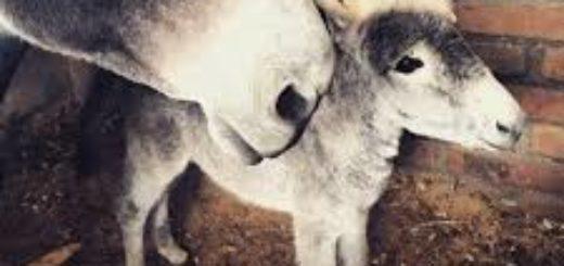 Психологическая экспертиза по делу о жестоком обращении с животными